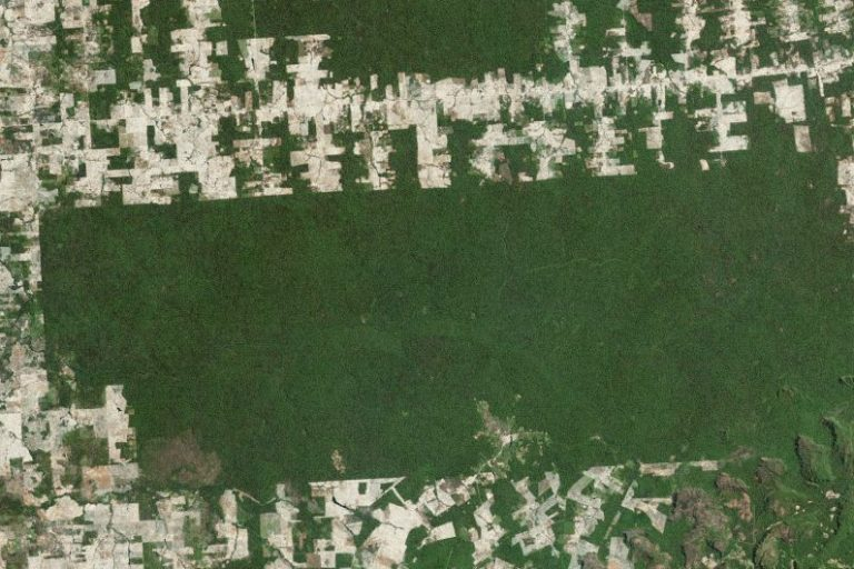 Deforestation drops 16 percent in the Brazilian Amazon