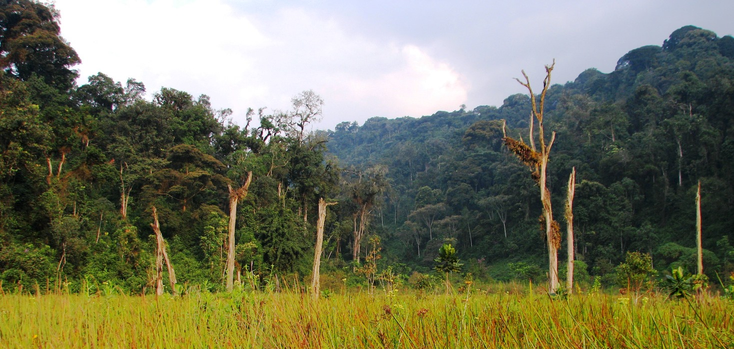 Forest in Nyungwe National Park, Rwanda.