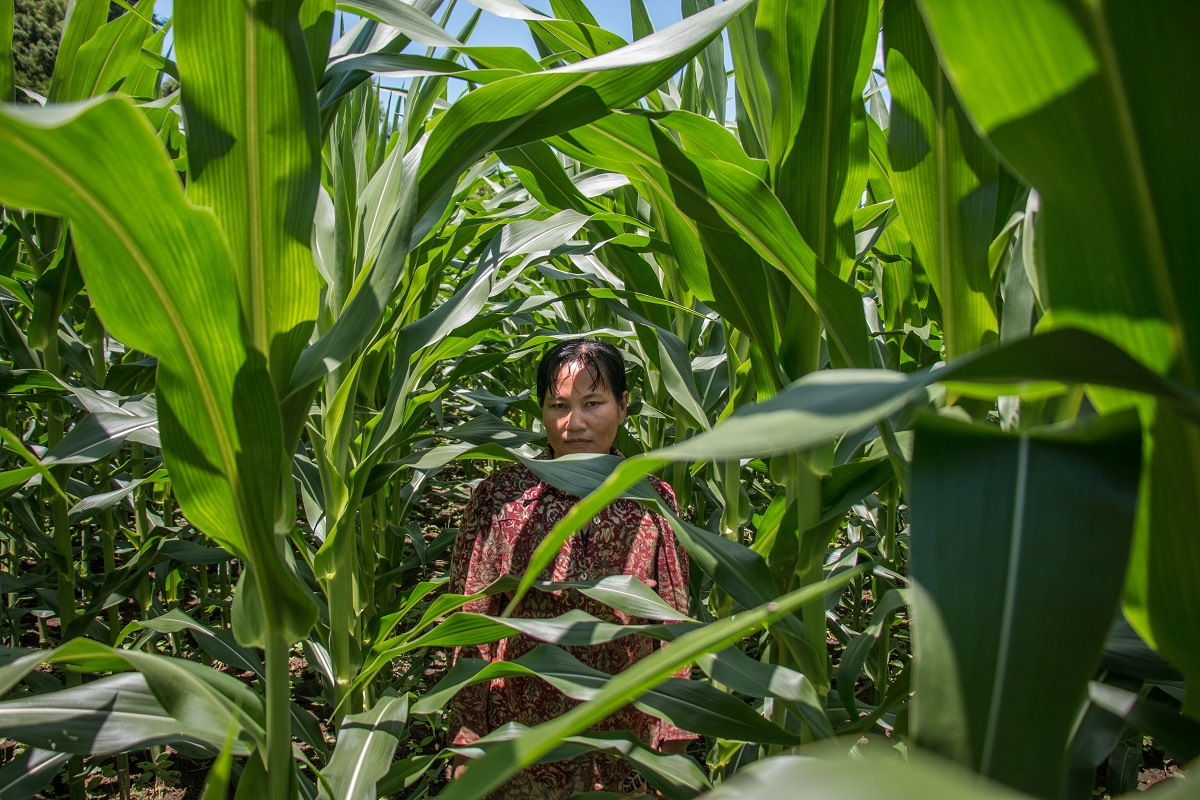 Pyar Chi, 43, poses for a portrait in the corn field she purchased with money made from selling charcoal. Photo by Nathan Siegel for Mongabay.