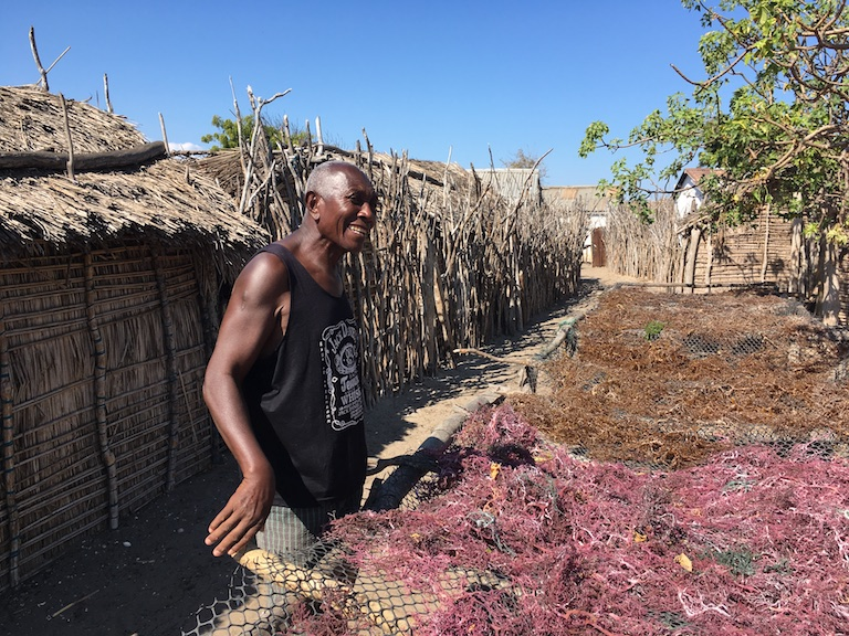 Dieudonné looks over drying seaweed near his home in Andrevo, north of Toliara. Photo by Rowan Moore Gerety for Mongabay.