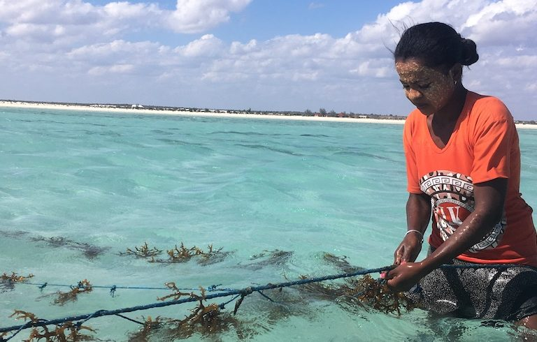 "Sanazy, from Beheloke Haut, says ""hunger"" pushed her to start farming seaweed three years ago: she earns about $20 from the crop during her best months. Photo by Rowan Moore Gerety for Mongabay."