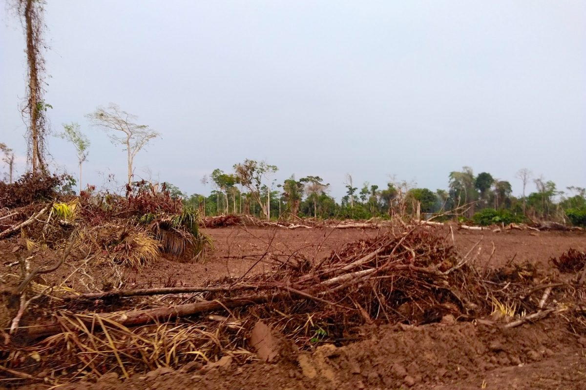 Interoceanic Highway incites deforestation in Peru, threatens more ...