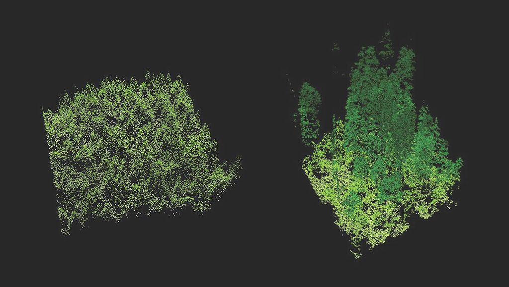 LiDAR image comparing old growth forest to a new tree plantation.