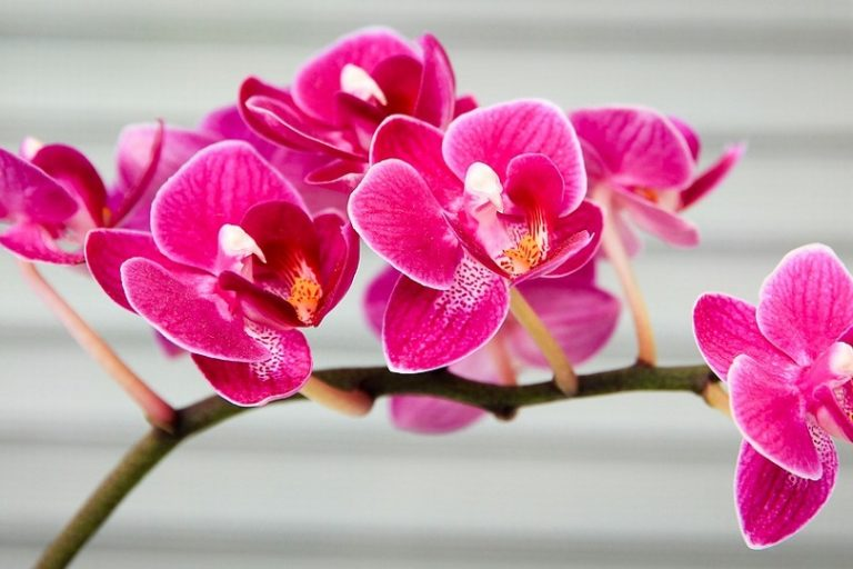 An orchid. Photo by Džoko Stach/Pixabay.