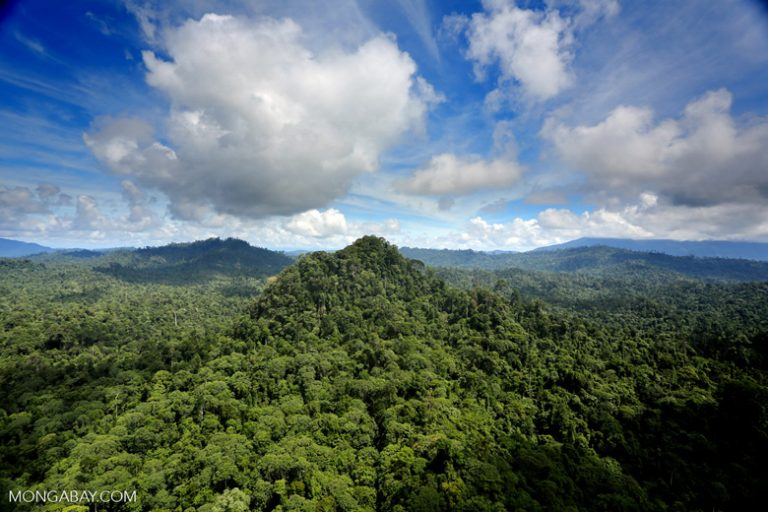 Tropical rainforest in Malaysian Borneo. Borneo's rainforests are still being cleared at a rapid rate.