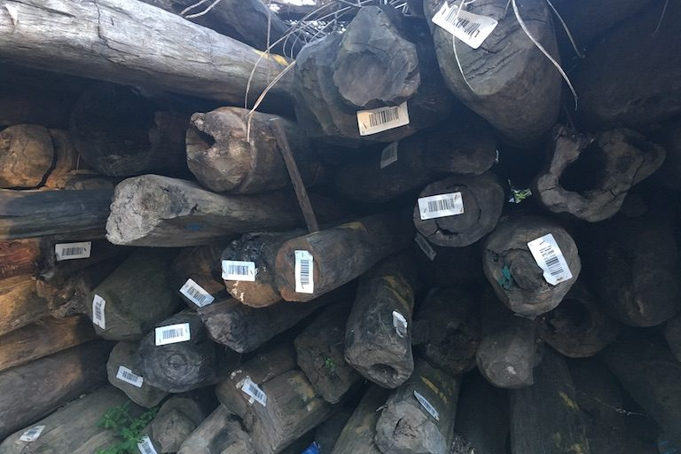 Many of the logs stocked outside the provincial forestry and environment office in Antalaha bear the marks of multiple rosewood inventories carried out since 2010: barcodes affixed in late 2015, as well as blue, yellow, and red paint from earlier counts. Photo by Rowan Moore Gerety for Mongabay.