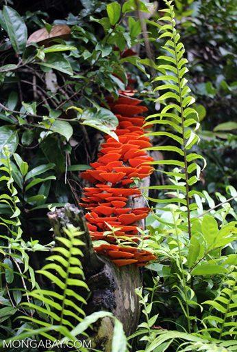 RMooreGerety_Rosewood_Fungus