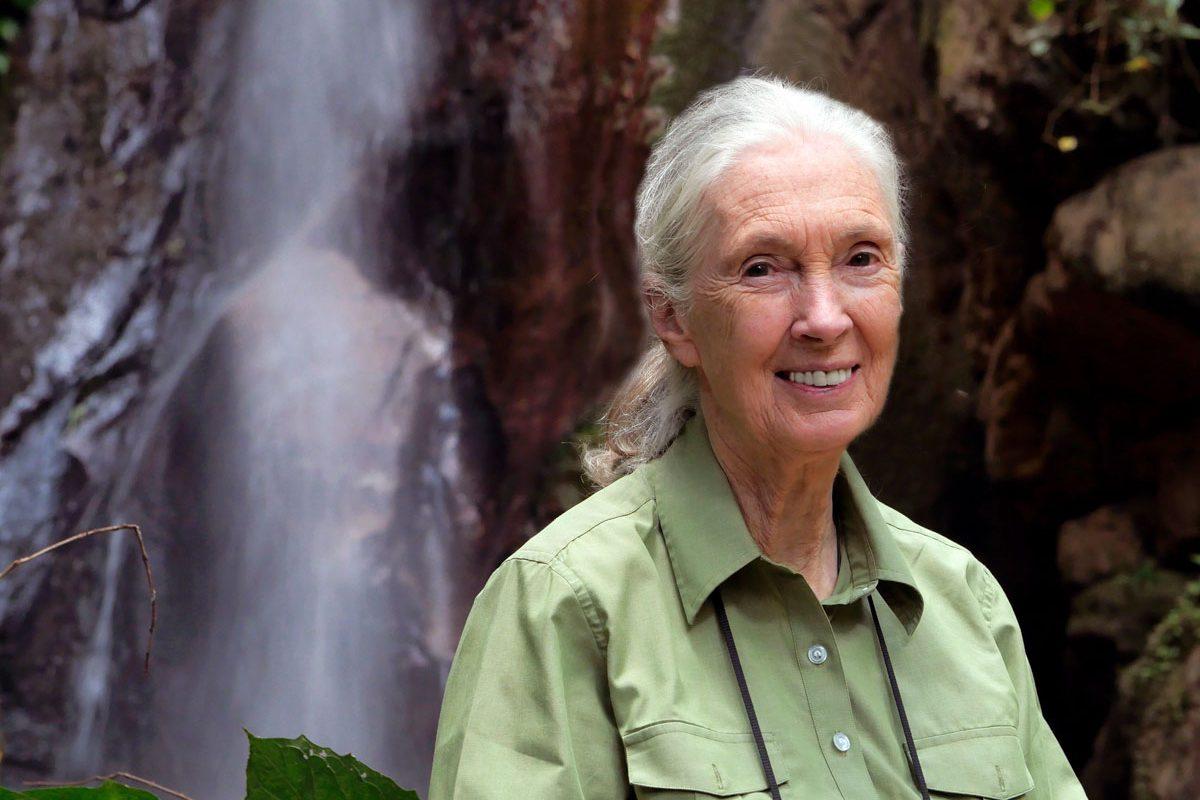 Jane Goodall. Photo credit: Jane Goodall Institute.