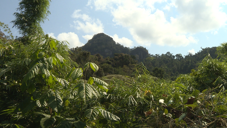 Marojejy National Park, one of the country's reknowned protected areas. Photo by Dan Ashby and Lucy Taylor for Mongabay.