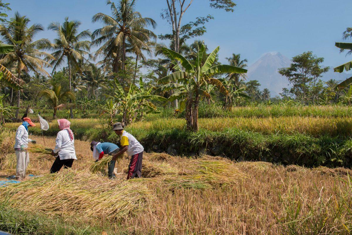 As Indonesia pushes flagship land reform program, farmers