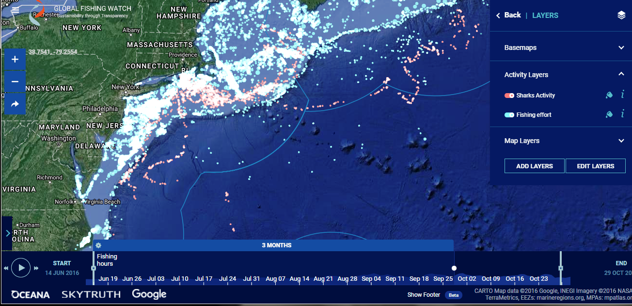 A close-up image of the study results, including GPS locations of tagged sharks (in red) and fishing vessels (in blue) via the interactive Global Fishing Watch map.