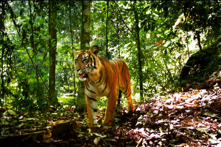 Tiger-Leuser-Grid-3A-best-shot1