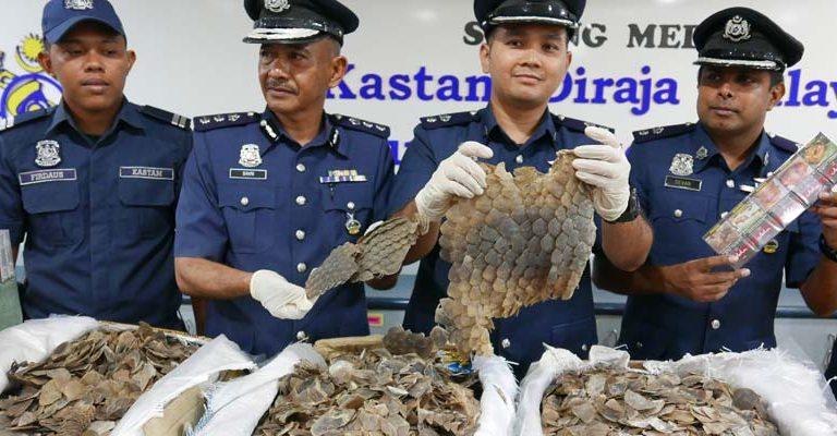 Malaysia seizes 337 kg of pangolin scales worth nearly $1 million