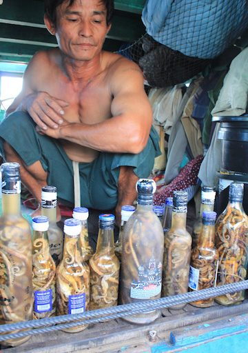 Seahorse tonics for sale on Phu Quoc Island, Vietnam. Photo courtesy of Allison Stocks/ Project Seahorse.