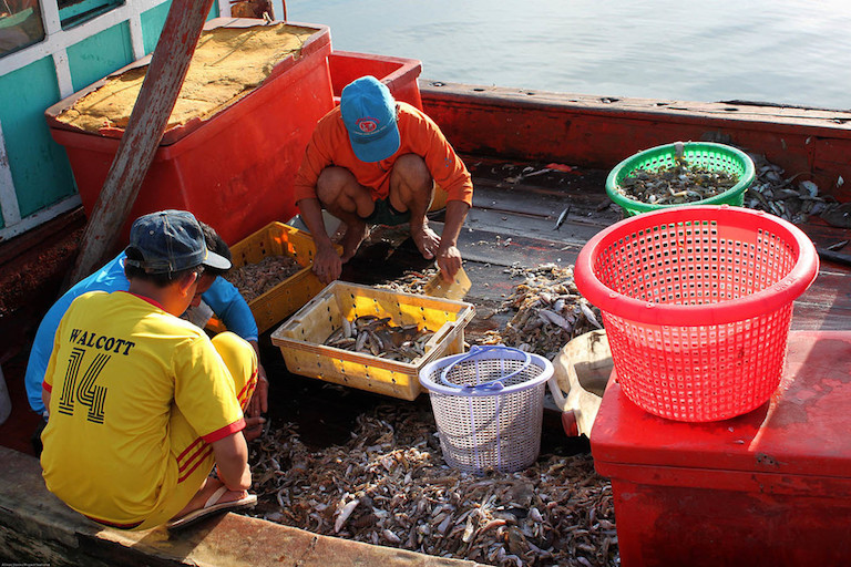 Bycatch from trawl fishing in Vietnam includes a range of small fish, octopus, squid, and seahorses. Small average daily catches add up to an estimated 37 million seahorses caught this way every year in just 22 countries. Photo by Allison Stocks/ Project Seahorse.