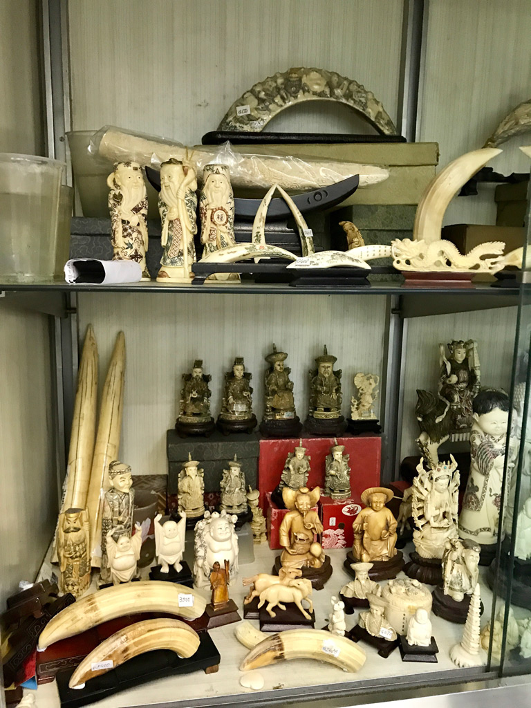 Hippo teeth, primarily used for ornamental purposes, are available for sale in a Hong Kong shop. Credit: Alexandra Andersson / University of Hong Kong