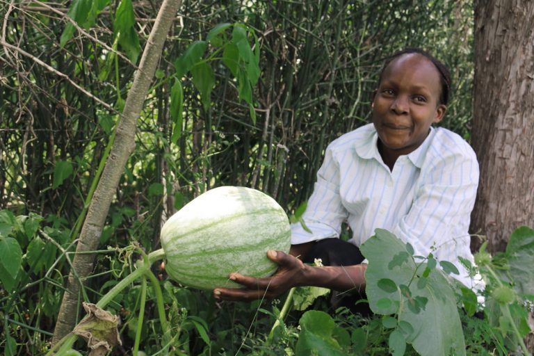 Kenyan farmers reap economic, environmental gains from ABCDs of agroforestry