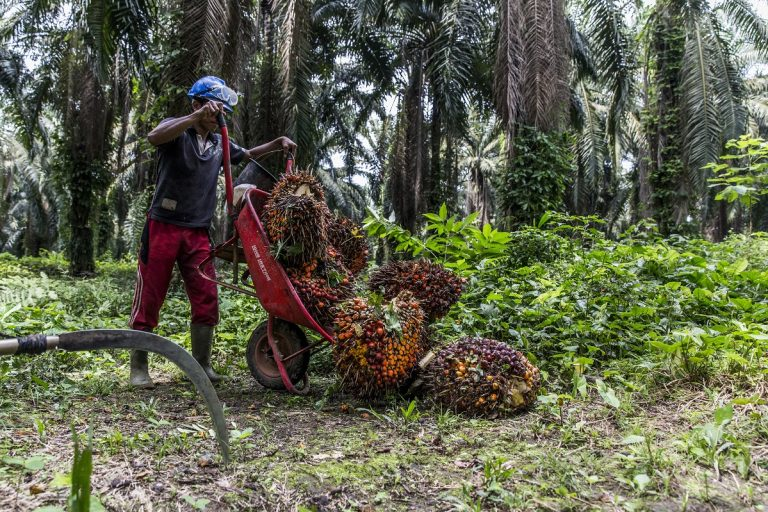 Labor abuses persist in RSPO-certified palm plantations, report finds