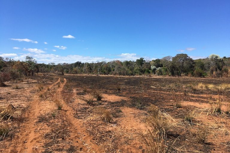 Where the forest once was: after clearing the land, a handful of cycles of planting corn and burning the fields after harvest have utterly transformed the landscape at the northern end of Bongolava. Photo by Rowan Moore Gerety for Mongabay.