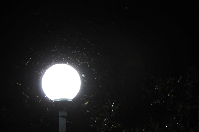 Nocturnal pollinators swarm around a street light in Virginia, USA. Photo courtesy of Serge Melki