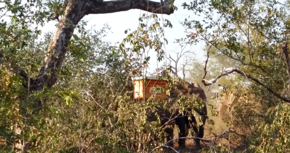 Beehives in the study protected marula trees from elephant impact, though they did not stop elephants from passing through the immediate area.
