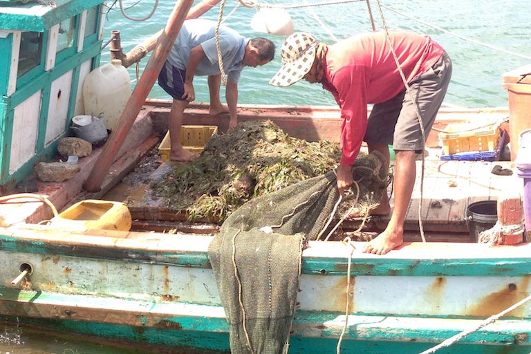 Illegal fishermen clear their nets after hauling them in full of seagrass. The seagrass and the juvenile marine animals that live within it usually die on board the boat before being thrown overboard. Photo courtesy of MCC.