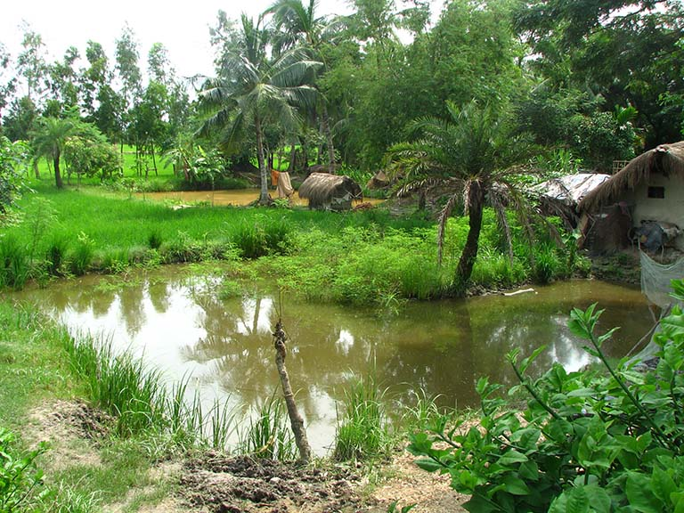 Paddy ponds surrounded by trees in Ramchandrapur village of South Dinajpur. Photo credit: Moushumi Basu/Mongabay