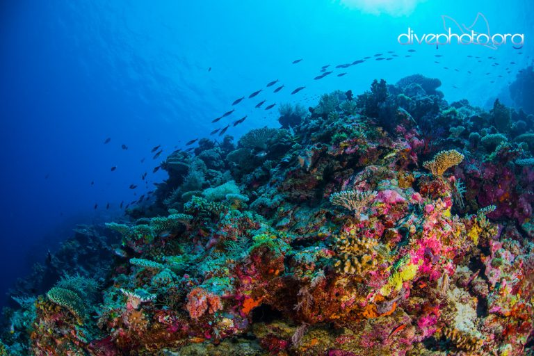 An underwater view of the reef at Layang Layang Atoll in the Spratly Islands, South China Sea. Photo courtesy of Greg Asner / Divephoto.org.