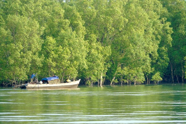 Large, healthy mangrove trees still stand in the Myeik archipelago, although many have been cut for charcoal production. Photo by Christoph Zockler.
