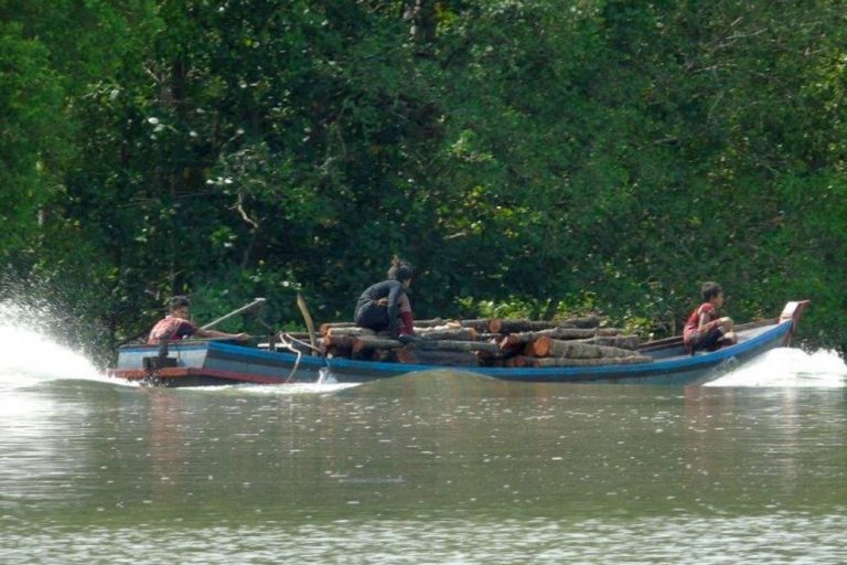 A boat load of cut mangroves. High-quality charcoal made from mangroves is exported to Thailand. Photo by Christoph Zockler.