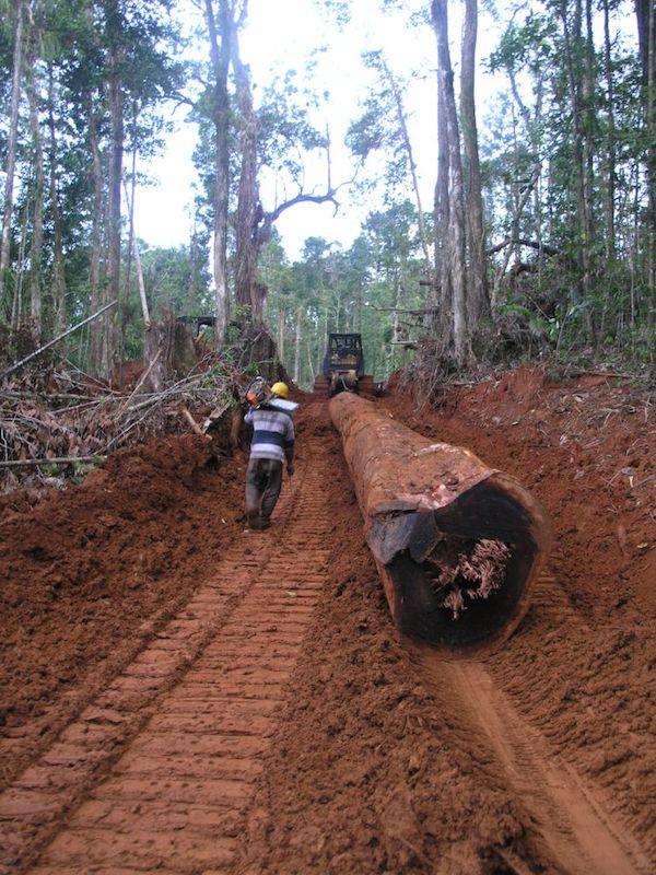 Effects Of Logging In Solomon Islands