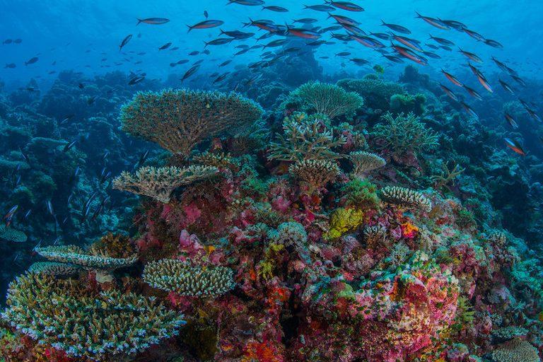 Layang Layang Atoll, Spratly Islands, South China Sea. Photo by Greg Asner/Divephoto.org.