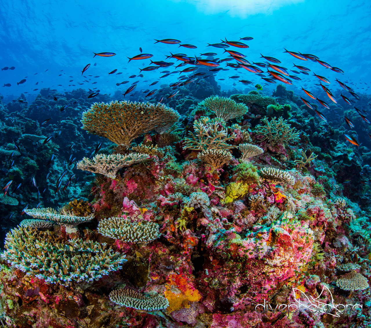 A coral reef ecosystem in the Sulug Sea, Borneo. Photo courtesy of Greg Asner / DivePhoto.org