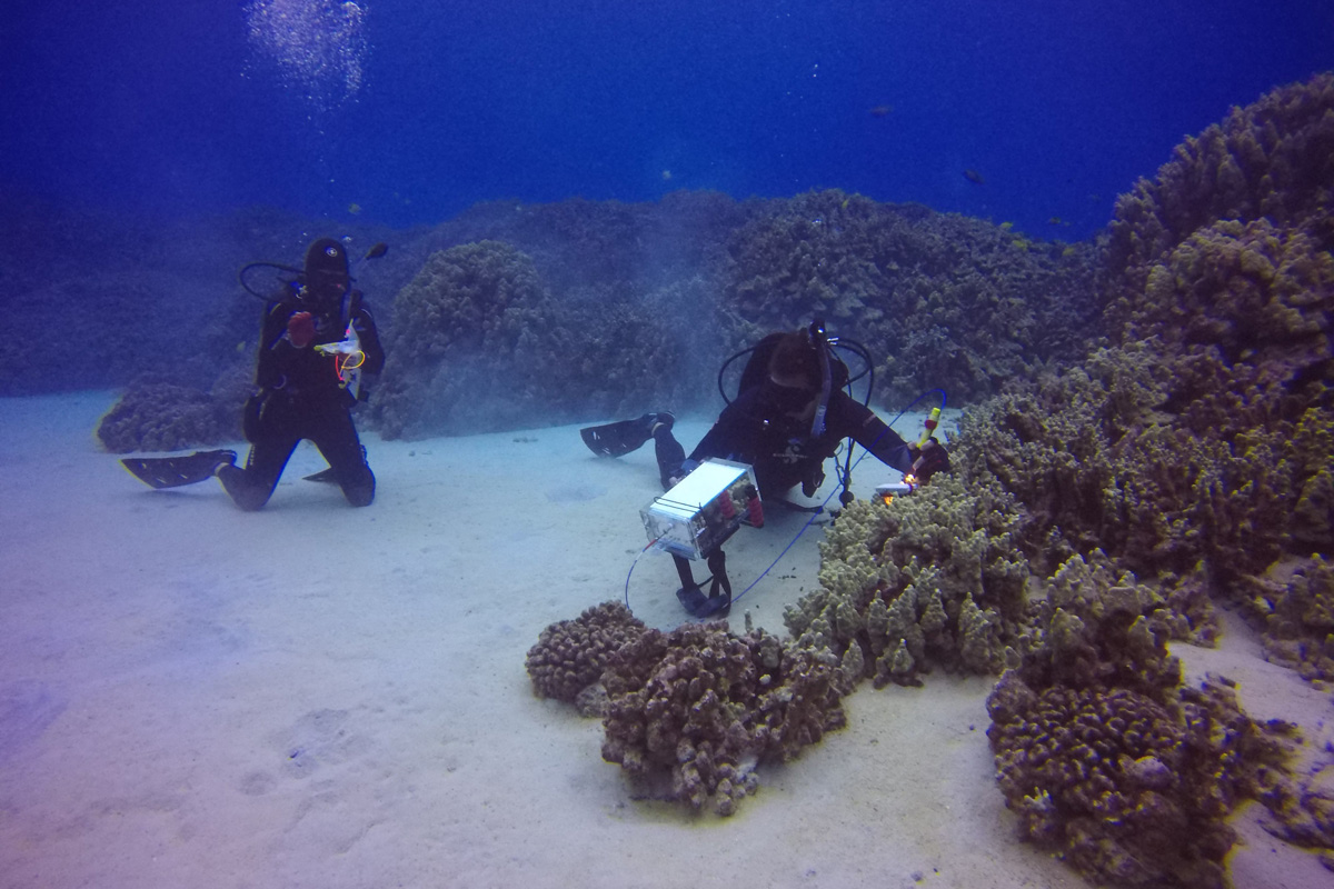 Divers collect the spectral properties of corals in preparation for future satellite missions. Photo courtesy of Chris Balzotti