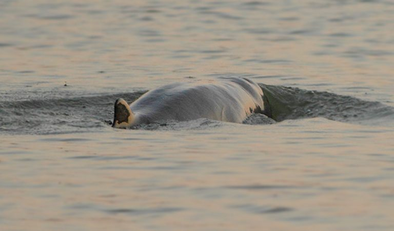 Company to probe for minerals close to Mekong river dolphin habitat