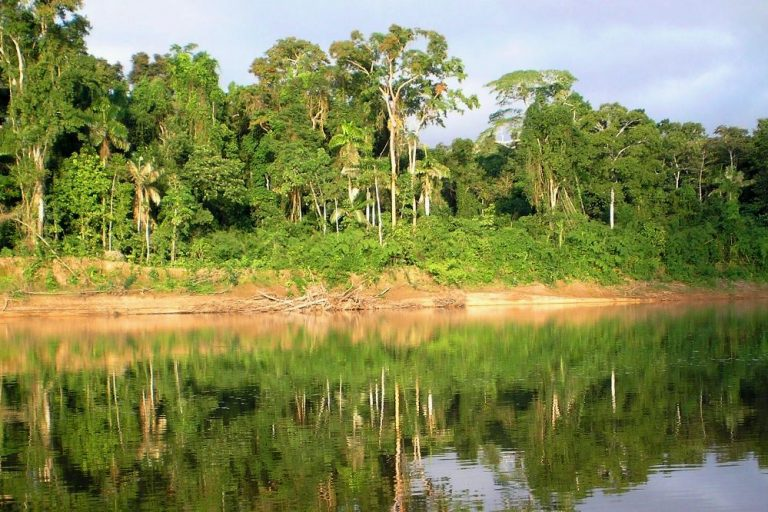 New satellite data reveals forest loss far greater than expected in Brazil Amazon