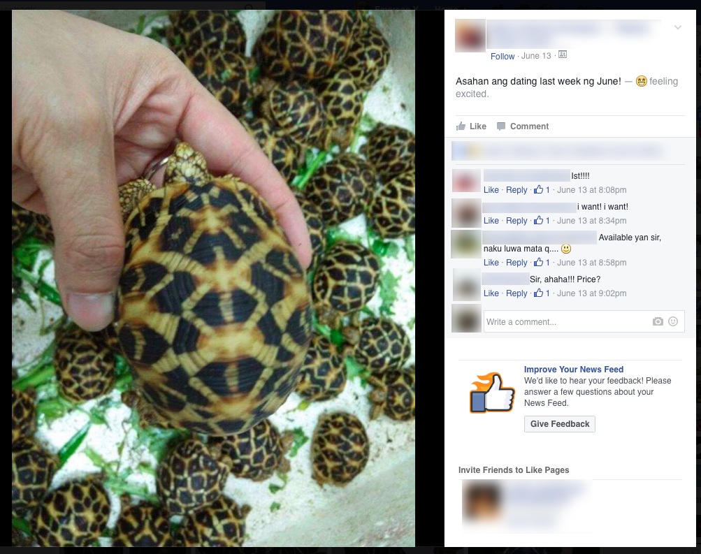 Facebook being used for illegal reptile trade in the Philippines