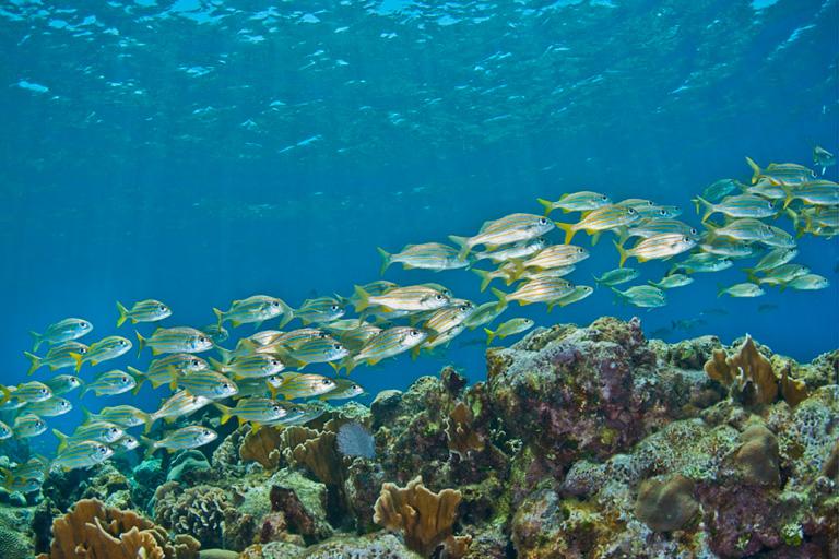 Importante avance: mejora la salud del arrecife mesoamericano