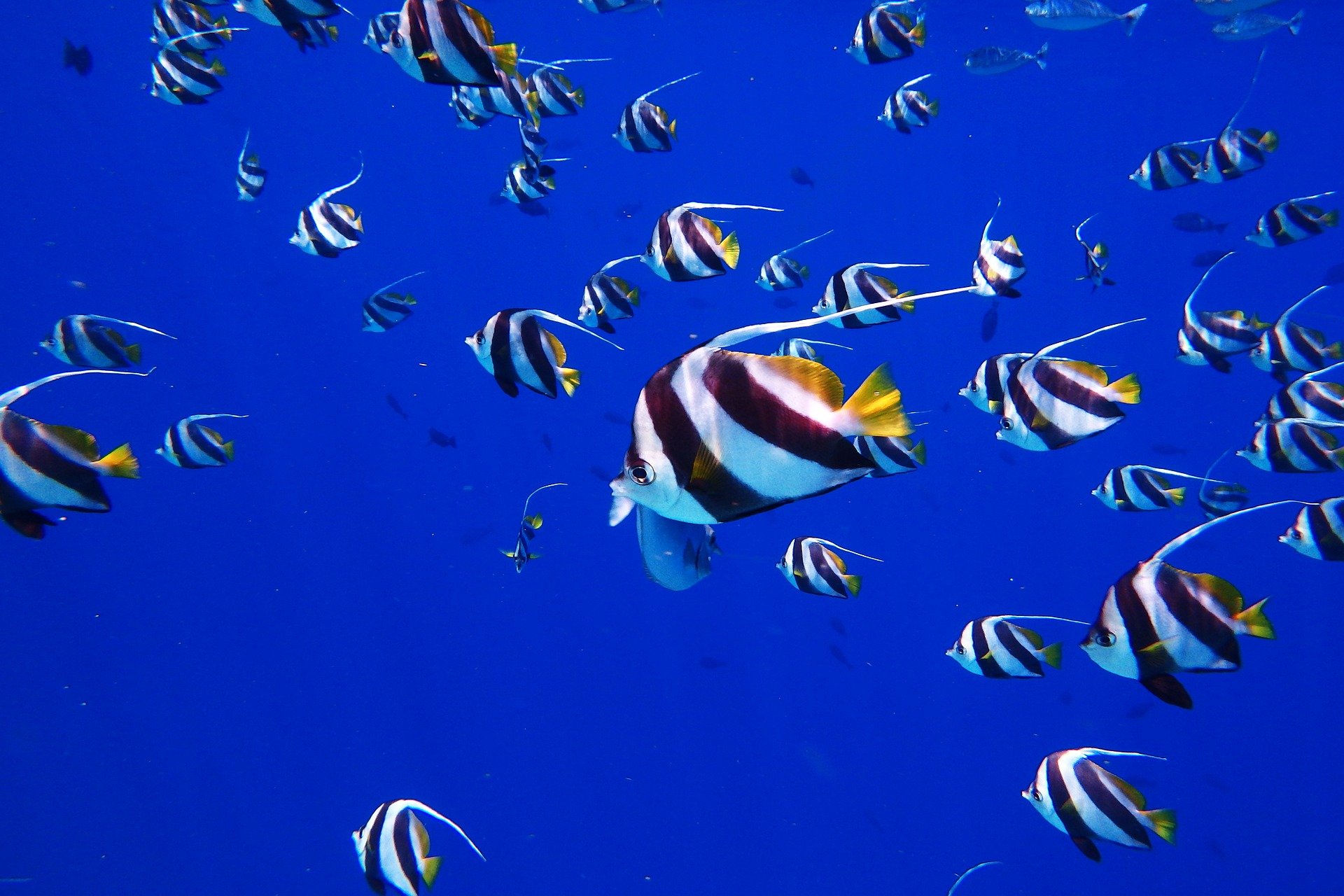 The ups and downs of marine protected areas: Examining the evidence