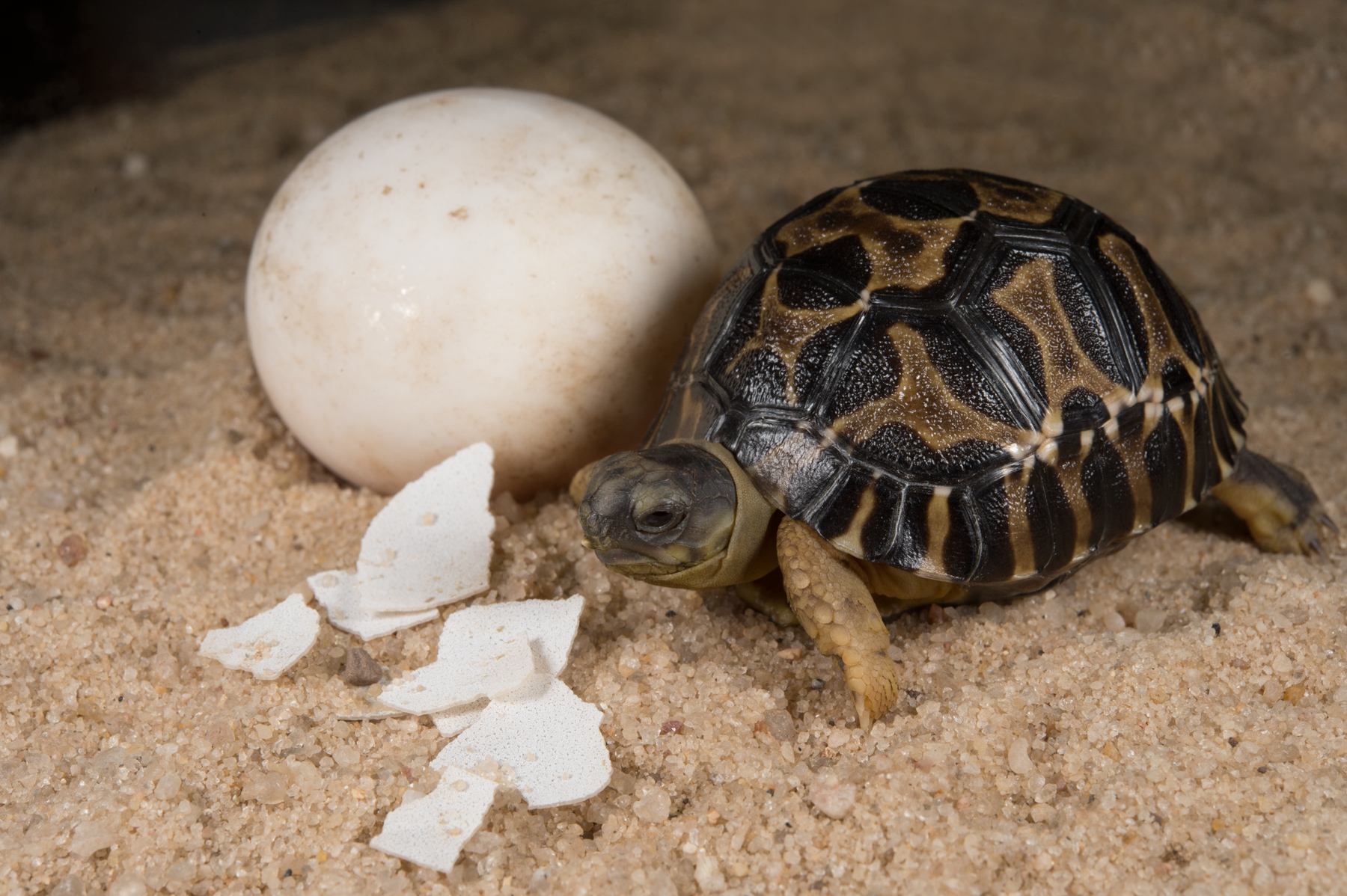Baby Photos Of 10 Of The World S Rarest Turtles From The Zoo Trying To Save Them