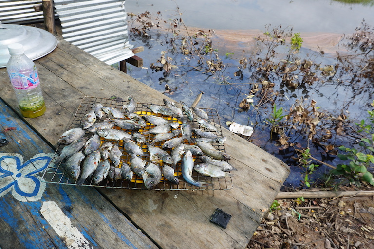 Fish harvested from the Kampot Mangrove Forest dry out at a docking site. Fish is the main source of protein for Cambodians. Photo by Matt Blomberg for Mongabay.
