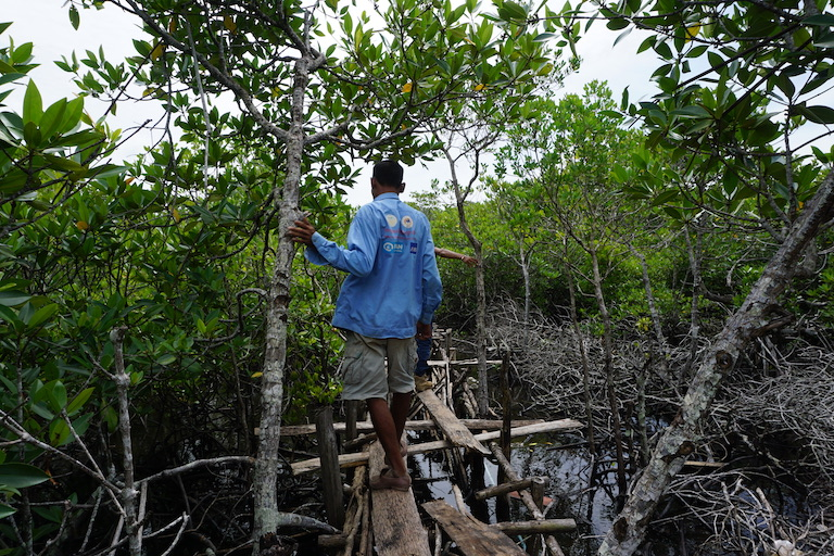 Sin Sen walks through Prey Smach's remaining mangroves. He said development has destroyed 80 percent of the original forest. Photo by Matt Blomberg for Mongabay.