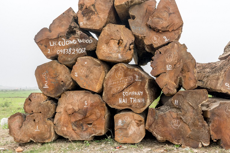 Huge logs of imported African timber sit on the side of a road in Van Diem, Vietnam. Photo by Michael Tatarski/Mongabay
