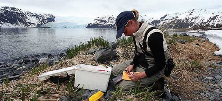 A graduate student conducts shorebird research at Kenai Fjords National Park, Alaska. NPS photo.