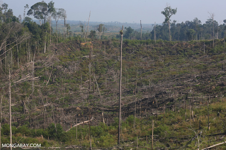 Carbon pricing could save millions of hectares of tropical forest