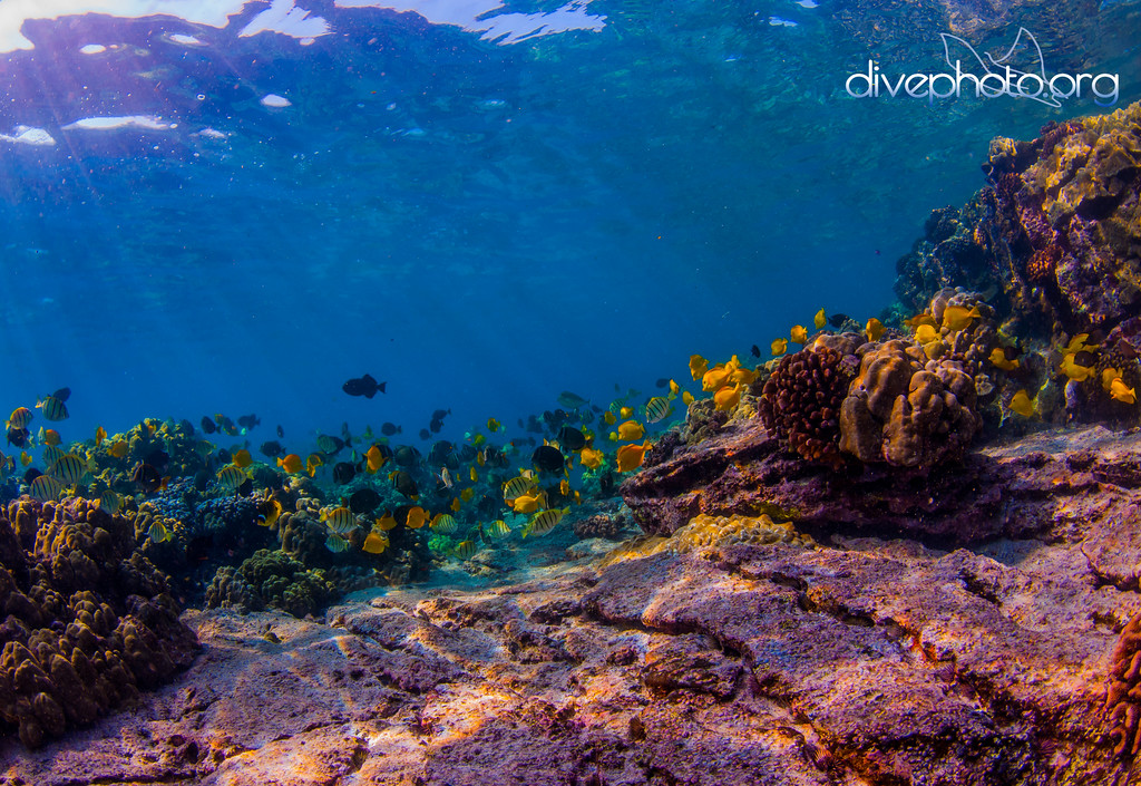 Scientists typically survey various reef habitats and species by getting in the water and counting.
