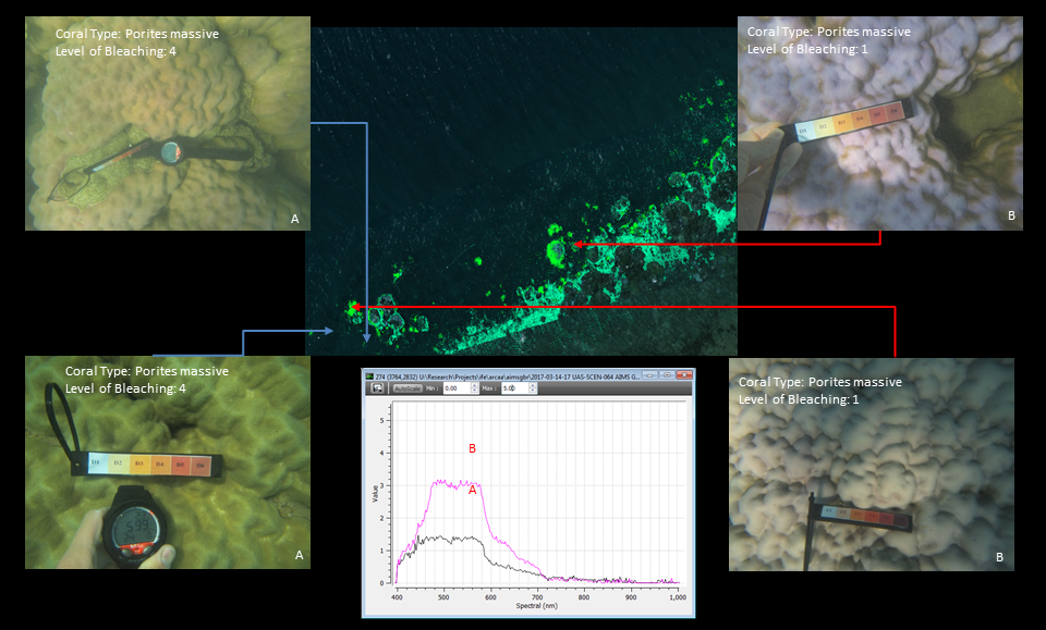 The graph shows the distinct spectral signatures of unbleached coral (Level 4, on left) and bleached coral (Level 1, on right) that are detected by the hyperspectral sensors.
