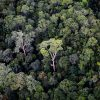 Rainforest in Borneo. Photo by Rhett A. Butler.