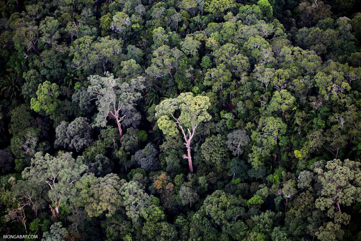 Rainforest in Borneo. Photo by Rhett A. Butler.