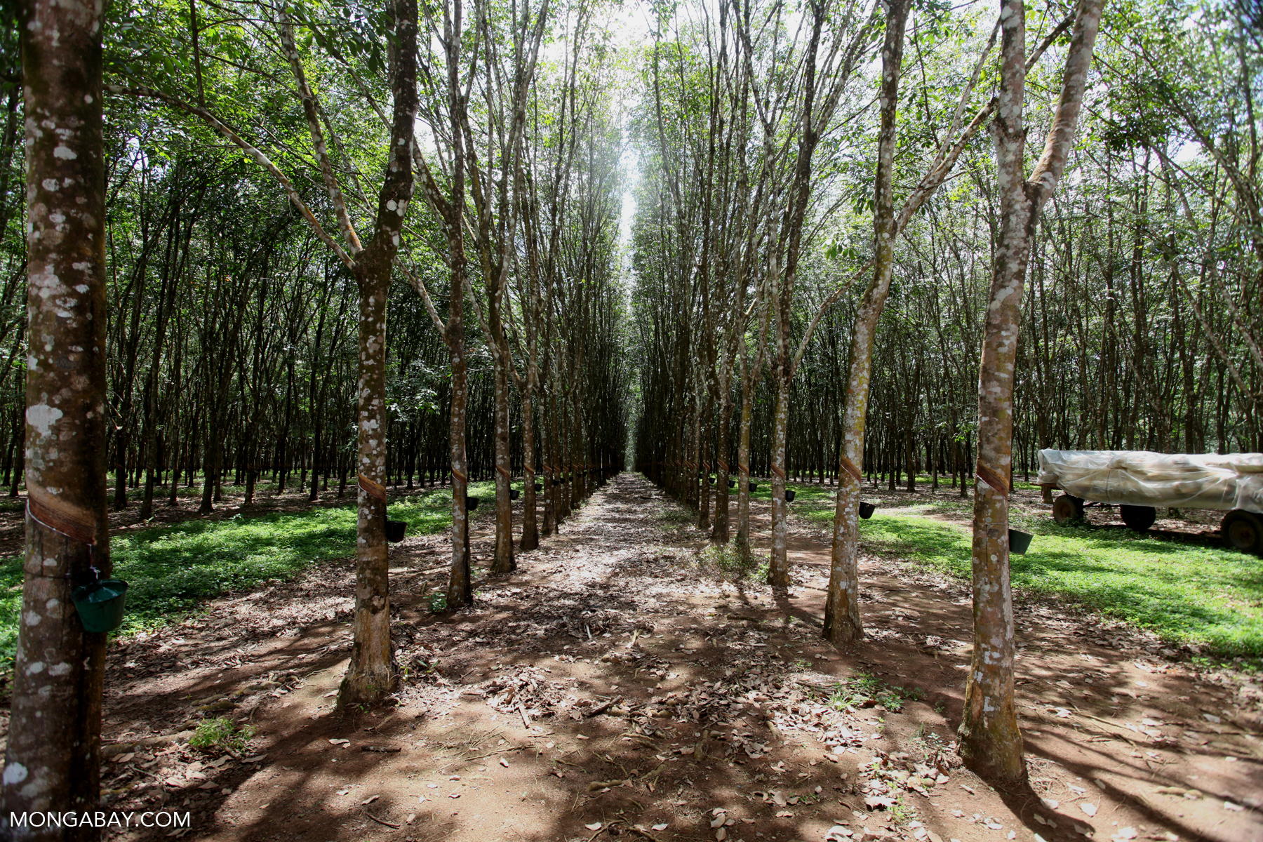 As Cambodia's Economy Grows, Its Rainforest Disappears